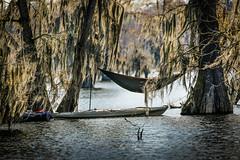 Do Not Disturb....... (Cajun Snapper) Tags: moss kayak naturallight chillin kayaking hammock spanishmoss romantic relaxation carefree cypresstrees valentinesday naturesbest donotdisturb thegreatoutdoors seclusion naturallighting lakemartin shadyspot baldcypress swamppeople louisianaheritage doesntgetanybetter lovelylouisiana canoneos5dmarkiii digitallouisiana valentinesday2015
