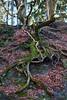 Hexenteich (Sylsine) Tags: bäume wurzeln moos menden sauerland