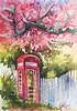 """Hillside 360. Hello?"" (jbroadway45) Tags: spring langley whidbeyislandwa plumtrees englishphonebooth judinyerges"