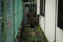 Today's Cat@2016-07-10 (masatsu) Tags: cameraphone apple cat osaka softbank iphone catspotting thebiggestgroupwithonlycats