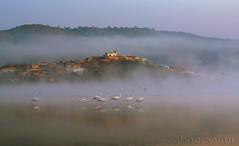 Greater Flamingo (Zahoor-Salmi) Tags: camera pakistan 2 macro nature birds animals canon lens photo tv google flickr natural action mark wildlife watch bbc 7d punjab discovery wwf salmi walpapers chanals beutty bhalwal zahoorsalmi