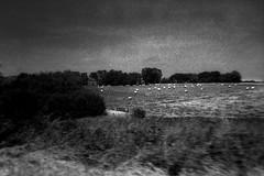 PARCELLE 16-017_23 (gyjishukke) Tags: monochrome analog hc110 normandie paysage delta3200 campagne 32 argentique 3200iso selfdevelopment mju2 dilb believeinfilm mjuii scanldef