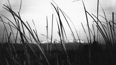 Drive Home (juanpablo.sl) Tags: white mountain snow black nature blackwhite nikon bokeh snowy mountainrange d7200 nikond7200