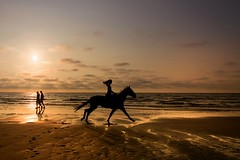 On golden beach (marielledevalk) Tags: people nature cloud landscape sky sun horse goldenhour sea water beach sunset