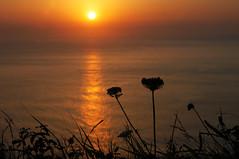 Quiete dorata (illyphoto) Tags: sunset explore photodiilariaprovenzi illyphoto photoilariaprovenzi