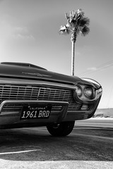 1961 BRD (autobahn66.com) Tags: ford thunderbird chrome california palm tree westcoast 1961 sixties americana sandiego minimalist
