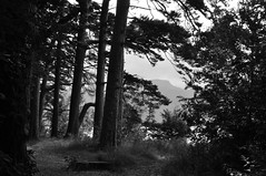 Derwent happenings (robbiemcintosh) Tags: nikond90 lake light 35mm 85mm derwentwater nature clouds tree