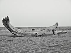 (ManuelAngel78) Tags: almería playademonsul monsul playa verano blancoynegro blackandwhite andalucía cabodegata
