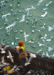 man feeding gulls (Rick Elkins Trip Photos) Tags: mumbai maharashtra india man feeding seagull