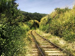 A walk over Sri Lanka's train tracks. #train #srilanka #srilankan #srilankatravel #visitsrilanka #srilankatrip #srilankatoday #srilankatourism #travel #trip #roundtheworld #worldtrip #travelpics #travelphotography #traveladdict #lonelyplanet #travelporn # (oetsie) Tags: trip travel train walk over tracks sri backpacking srilanka lonelyplanet backpacker srilankan roundtheworld worldtrip travelphotography travelpics a backpackingasia traveladdict srilankatrip backpackerlife lankas srilankatravel srilankatourism srilankatoday travelporn visitsrilanka backpackingadventures backpackingdream