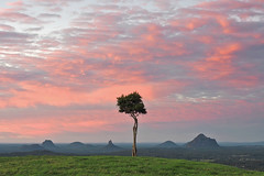 One Tree Hill, Maleny (Lazy Win) Tags: sunshinecoast sunshinecoasthinterland maleny sunrise tree mountain landscape australianlandscape olympus olympusomdem5m2 australia queensland glasshousemountains
