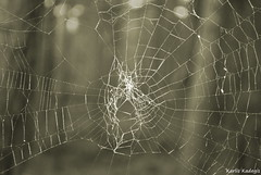 Cobweb (KadKarlis) Tags: cobweb spider web nature black white bw woods wildlife forest