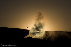Upper Geyser Basin at Sunset-2 (shutterdoula) Tags: yellowstone uppergeyserbasin sunset