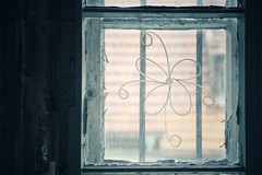 finding flowers (***toile filante***) Tags: windowswednesday window fenster blume flower decay poetic poetisch