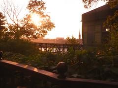 Hermans glow 2 (Helen White Photography) Tags: hermans restaurant vegetarian stockholm terraced gardens view sunset summer