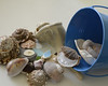 shards of glass (remiklitsch) Tags: collaboration dogwood52 dogwood52week33 pail shells glass sea blue azure collection summer