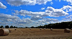 Tottenhill - Nt Dray and Horses 2 (davejrwebster1963) Tags: fenland kingslynn