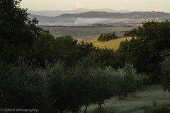 Olive Trees (dmj.dietrich) Tags: dorciavalley dmjd italia italy toscana tuscany valdorcia olive trees landscape serene peaceful outdoor sunrise