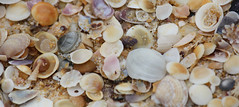 Sea shells (Bensmythology) Tags: sea ocean beach shell shells seashells macro closeup coast coastal water marine nature natural canon 450d