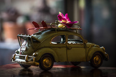 Urgent flower delivery (DingoShoes - life's a dream) Tags: orchid flower foryou car focus dof depthoffield light nikond7000 sigma105mmf28 old vintage rusty