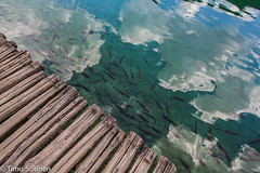 Fishes (Timo Sutinen) Tags: fish path sky water reflection nature amazing plitvice nationalpark croatia summer holiday 2016