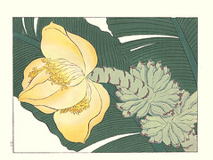 Japanese banana (Japanese Flower and Bird Art) Tags: flower banana musa basjoo musaceae hoitsu sakai kiitsu suzuki kimei nakano nihonga woodblock picture book japan japanese art readercollection