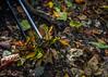 Relax (Delfinibi) Tags: magyarország mzuiko hungary ungarn zuiko outdoor autumn ősz avar túra nature natur natural természet olympusepl5 olympus olympusm1442mmf3556iir epl5