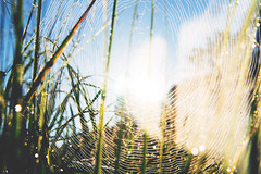 (m.majphoto) Tags: nature earlymorning dew drops droplets spiderweb web waterdrops sunrise