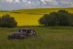 Summer Colors (Len Langevin) Tags: summer canola alberta old abandoned rusty car canada nikon d300 nikkor 18300