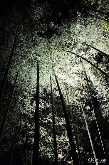 嵐山花燈路-竹林之道05.jpg