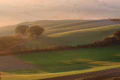 A morning in Tuscany (deus77) Tags: morning trees light italy sun sunrise landscape countryside val valley tuscany cypress dorcia