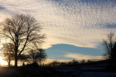 January sky (..Ania.) Tags: trees winter light sky silhouette clouds afternoon january 52in201521silhouette