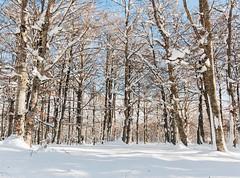 Snow forest (Muna Mun) Tags: winter espaa snow cold blanco forest landscape spain nieve paisaje bosque invierno monte frio hielo navarra wihite