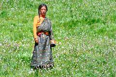 Dressed in a butterfly print, standing in a bed of flowers, Tibet 2014 (reurinkjan) Tags: portrait picture photograph portraiture brocade portrayal likeness 2014 tibetangirl bedofflowers easterntibet tibetanwomen storytellingphoto storytellingphotography  butterflyprintdress amdo tibetanplateaubtogang tibet tibetanchildrenbtruk tibetanrobechuba tibetannationalgarbchuba phyuba sershulcounty girlbumo sershultekchendargyeling childspugu tibetannationalitytibetansbodrigs tibetannationalgarbphyuba pilgrimnekorwakormi tibetannationtibetanpeoplebkyimigy perennialplantslomangtupptsishing pilgrimagenekor femalechildbmchungngu femalechildmoyi smallgirlmoji facedongpa dong dongkha facecolordongdok chubalonggowntibetanstyledresschupa kham  sershlgn butterflychemalep marbledorstripedbutterflychemaleptrapo butterflyparnassiusemperatorjetaktrawo janreurink onpilgrimagenekorpa greatsacredplacenechen photostorydrapardrung