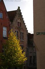 Beloved Brugge (Natali Antonovich) Tags: autumn tree window architecture belgium belgie brugge style bruges belovedbrugge pensiveautumn
