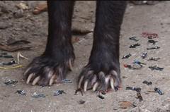 1461 (Jasper Kyodaina) Tags: man guy feet giant paw squish sole stomp crush giantess trample