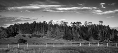 Pine Line - bw (Joe Josephs: 3,166,284 views - thank you) Tags: california sunset sunsets pacificocean forests pinetrees californiacentralcoast pacificcoasthighway travelphotography landscapephotography pineforests outdoorphotography nikond810 copyrightjoejosephs ©joejosephs2015