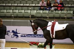 Vaulting - 2015 CHI-Al Shaqab (www.ziggywellens.com) Tags: horse event equine doha qatar vaulting chialshaqab