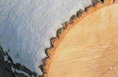 Winter Cut (peterkelly) Tags: wood winter snow ontario canada digital log cut guelph marden northamerica mardentrail