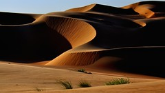 Waves (flowerikka) Tags: sand desert dunes uae camels liwaoasis emptyquarter rubalkali apricotandcinnamoncolors