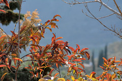 Fin del invierno (alfonsovalgar) Tags: nikon invierno torremolinos tonalidades teleobjetivo d5200