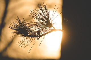 Evening Silhouette **Explored**