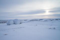 DSC01536 (ekremenak) Tags: photo iceland 1502 150212 doublehaybales