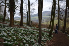 Snowdrops and the Painswick Valley (heathernewman) Tags: uk flowers england cotswolds snowdrops painswick