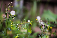 wish (queen--mary) Tags: life flowers plant blur green nature beauty yellow canon rebel interesting natural growing wish t3i