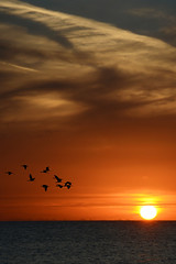 Al cader della giornata... (alessiolupo) Tags: santa sunset sun birds nuvole scout punta sicily lovely migration sicilia croce lupo alessio montalbano secca camerina agesci trramonto