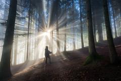 Wanderland (@hipydeus) Tags: forest bayern bavaria hike sunrays wald wandern sonnenstrahlen
