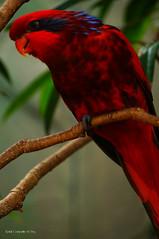 Cores incríveis (ronalyconstantino) Tags: birds gardens orlando pássaro eua busch