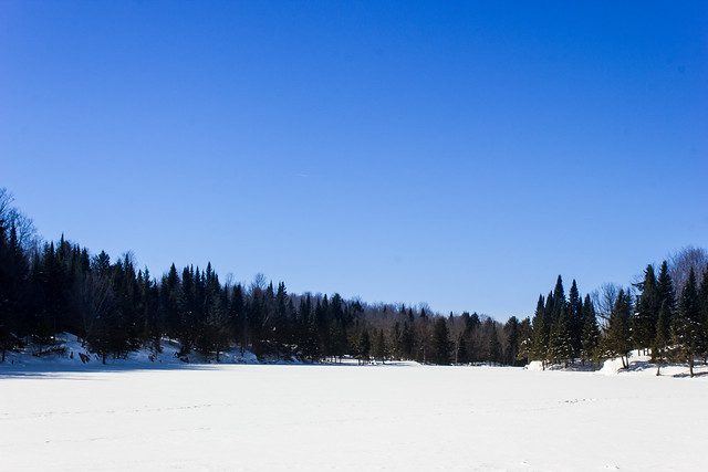 Lac des castors - Beavers Lake - Parc Omega