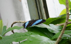 Butterfly House, RHS Wisley
